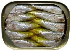 Packed Sardines